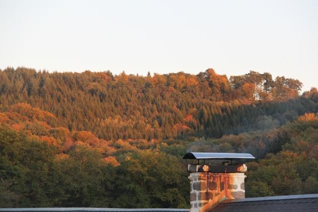 Corrèze rousse